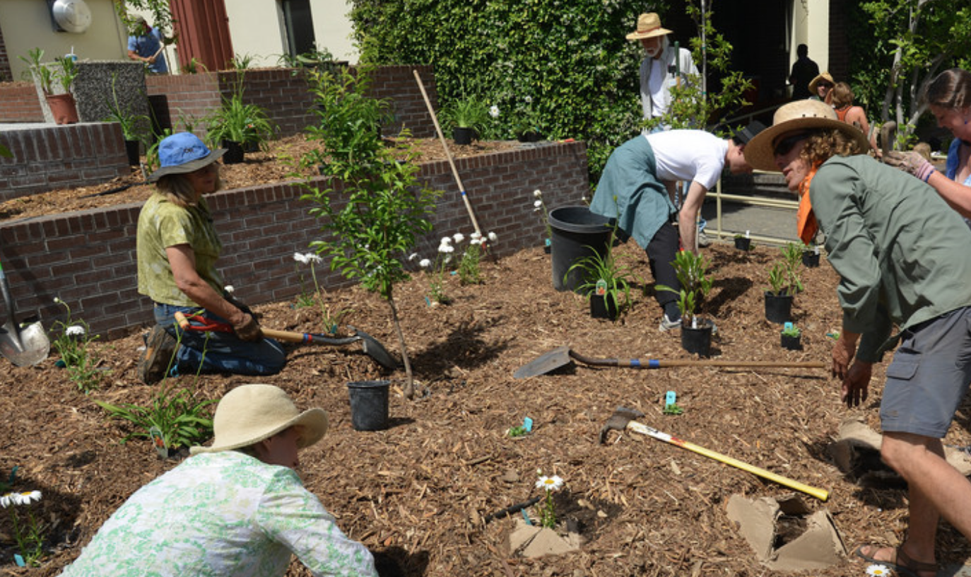 Sebastopol City Hall and Library Monthly Garden Day – What\'s ...